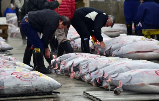 Pacific tuna meet fails to agree on cutbacks for Pacific fish market