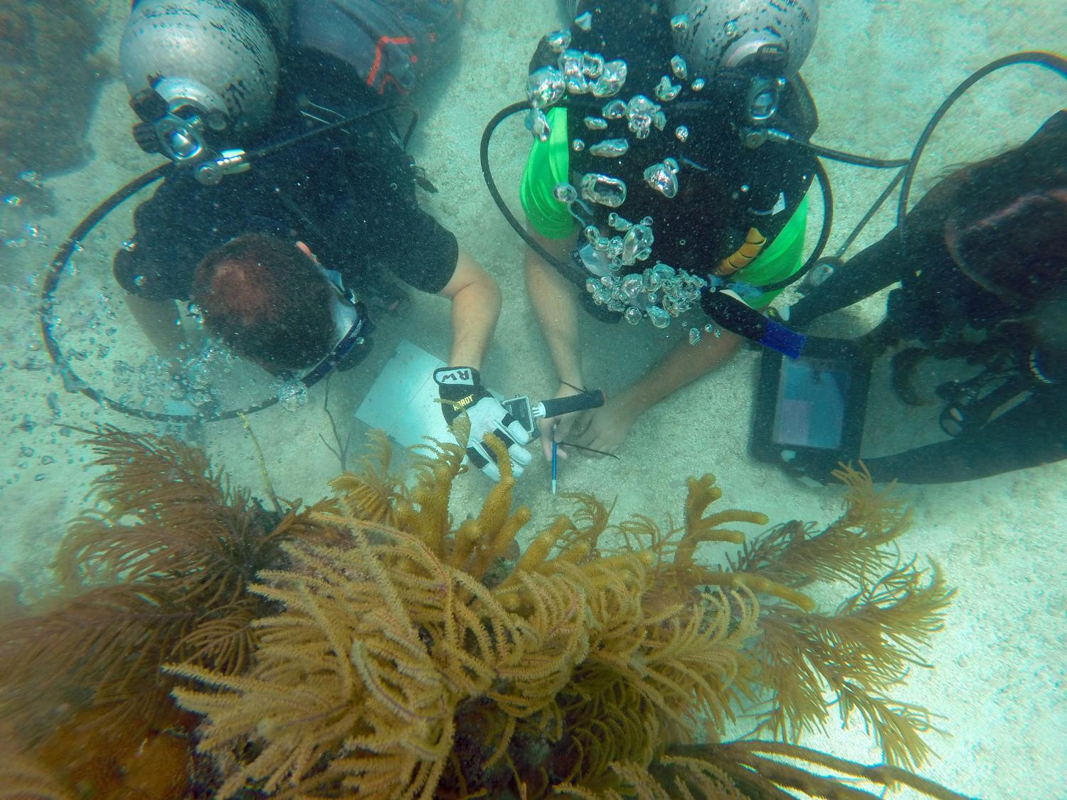 NASA Trains Astronauts Underwater For The Mars Mission