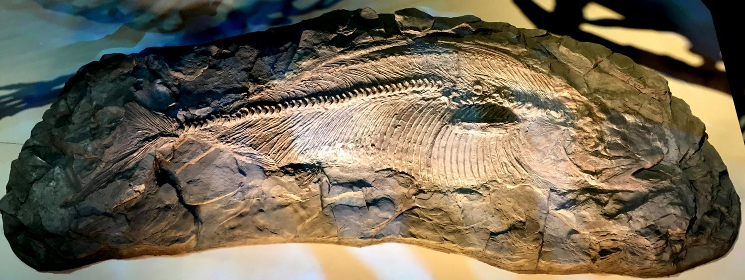 Texas fish of dinosaur era found to be new species for New fish discovered