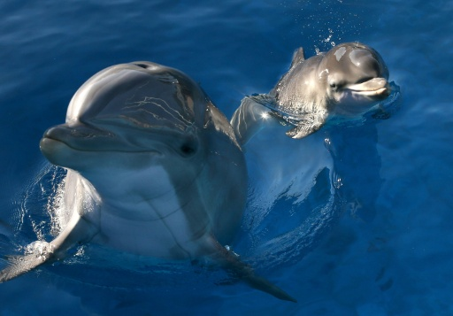 Dolphins to get coastal sanctuary in US
