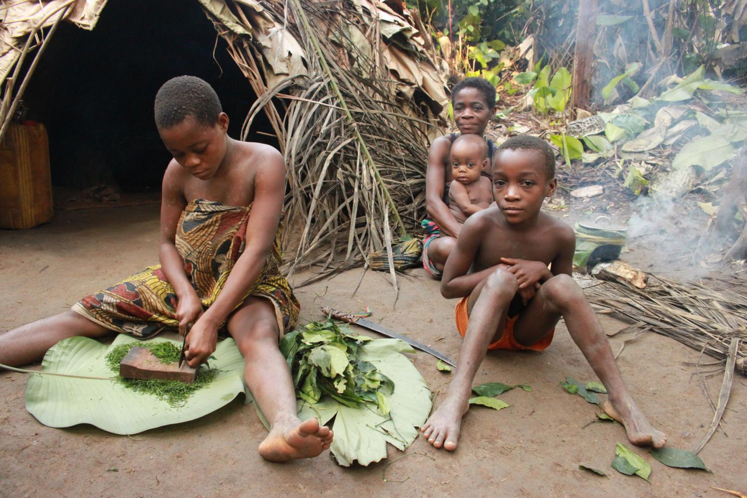 a overview of three main pygmy groups in africa The pygmies of central africa adults usually grow to be only three or four feet tall some pygmy groups use nets to hunt, while others use spears or bows and.