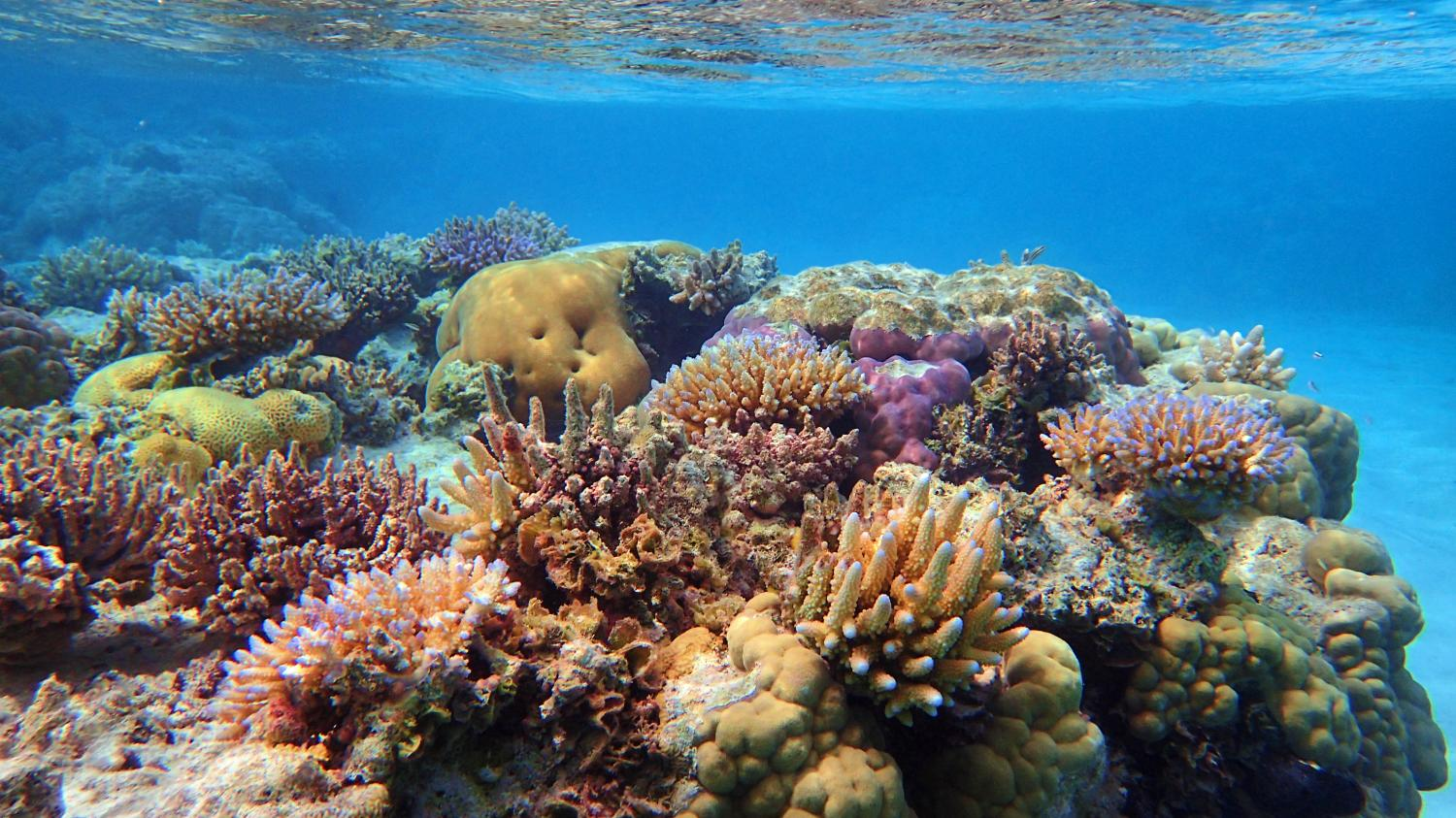 a look at how coral reefs form and its prevalence Basic facts about coral reefs coral reefs are some of the most diverse ecosystems in the world thousands of identical polyps live together and form a coral colony.