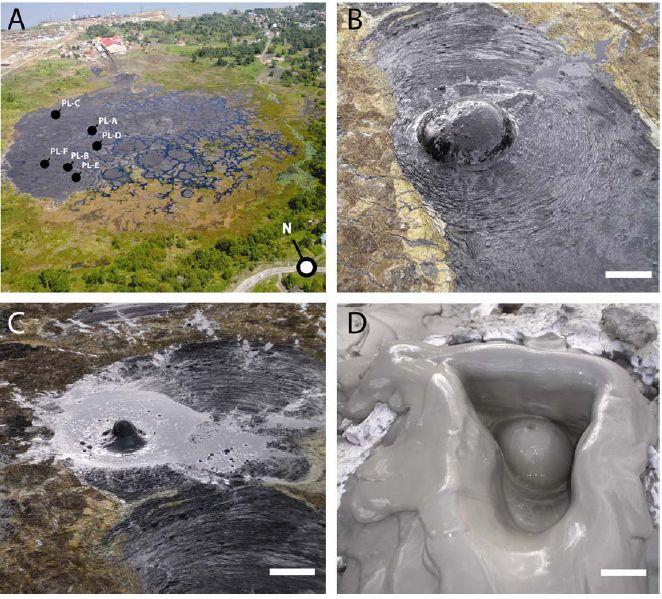 Microbes Found In Natural Asphalt Lake