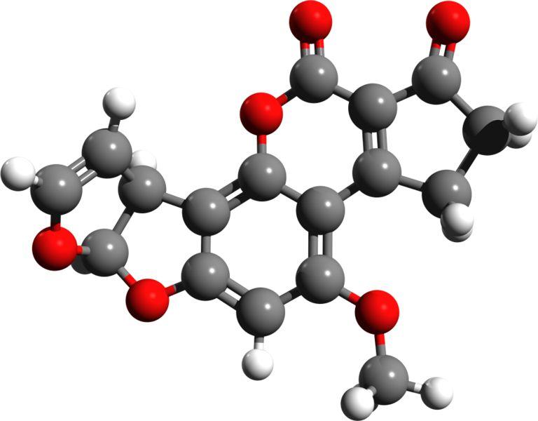 The Body S Major Food Molecule Is