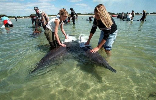 Beached dolphins - photo#23