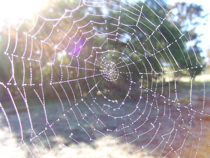 physics case study spider silk