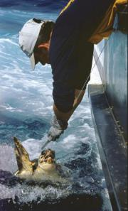 How can accidental captures of loggerhead turtles be reduced?