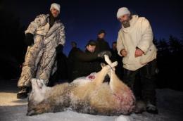 Hunter Sune Johansson (Down center) weights a female wolf