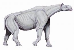 Indricotherium, based on new skeletal reconstruction.