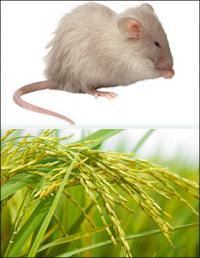 In fending off diseases, plants and animals are much the same, research shows