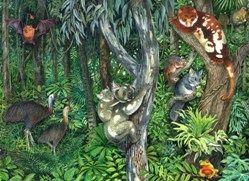 Light shed on koala evolution