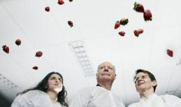 Low-maintenance strawberry may be good crop to grow in space