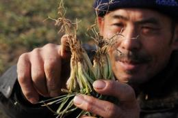 Many Chinese farmers are concerned drought will spell disaster for crops when spring arrives