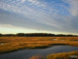 Many coastal wetlands likely to disappear this century
