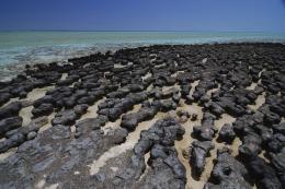 Modern stromatolites at Shark Bay, WA