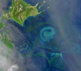 More hurricanes in greener seas?