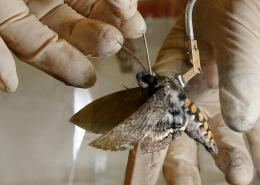 Moths Tell Us How Organisms Use Resources