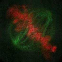 Movies for the human genome: Scientists identify the genes involved in cell division in humans