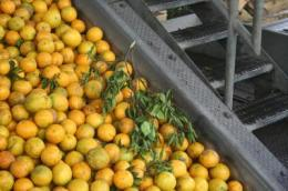 New findings provide cost, benefit data for Florida citrus industry