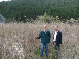 New Miscanthus hybrid discovery in Japan could open doors for biofuel industry