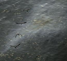 New questions arise on dispersant use in oil spill (AP)
