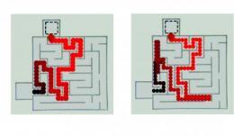 Oil droplets can navigate complex maze
