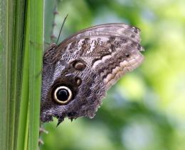 One in three butterfly species in Europe are falling
