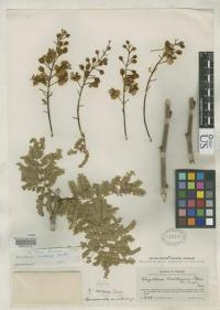 Online access to the plants of the world is available
