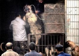 People gather to watch workers slaughter dogs at a shop selling meat from the creatures