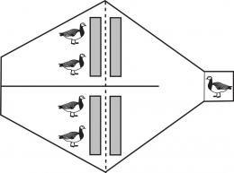 Personality of geese determines their foraging behaviour