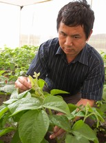 Pest-resistant soybeans grow out of MSU research lab