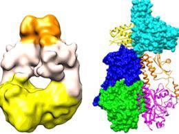 Новый флуоресцентный белок заменит МРТ и рентген