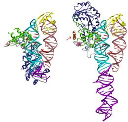 Proteins find their way with address label and guide