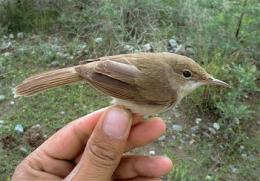 Rare bird's breeding ground found in Afghanistan (AP)