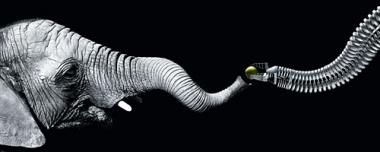 Robotic arm shaped like an elephant's trunk (w/ Video)