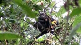 Rwanda's Forest of Hope to expand by 21 percent, begin corridor for endangered chimpanzees