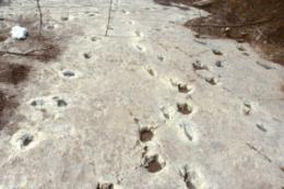 Secrets of dinosaur footprints revealed, thanks to Goldilocks