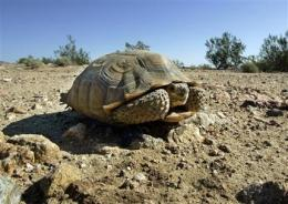 Solar showdown in Calif. tortoises' desert home (AP)