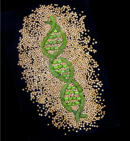 Soybean genome analysis reveals pathways for improving biodiesel
