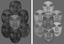 Study shows skin tone is not the major determinant of perceived racial identity