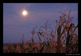 Super harvest moon to produce 'rare twilight glow'