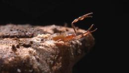 Biologist illuminates unique world of cave creatures