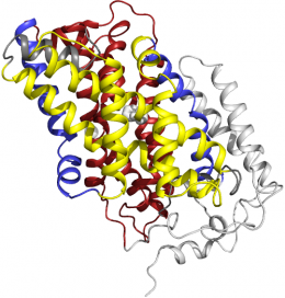Team reveals all three structures of single transporter protein