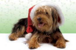 Christmas treats dangerous for pets