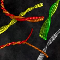 The assembly of protein strands into fibrils