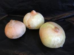 The onion, a natural alternative to artificial preservatives