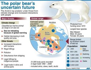 The polar bear's uncertain future
