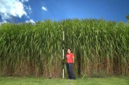 The pros and cons of Miscanthus -- uses more water, leaches less nitrogen