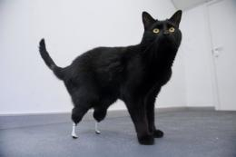 The prosthetic legs were developed by a team from University College London led by Professor Gordon Blunn