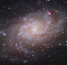 The Supernovae of Triangulum